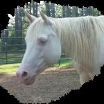 Horse Feed - Wholefood & Organic